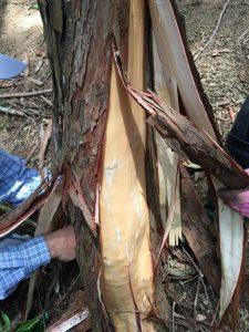 皮をむいた木の根元