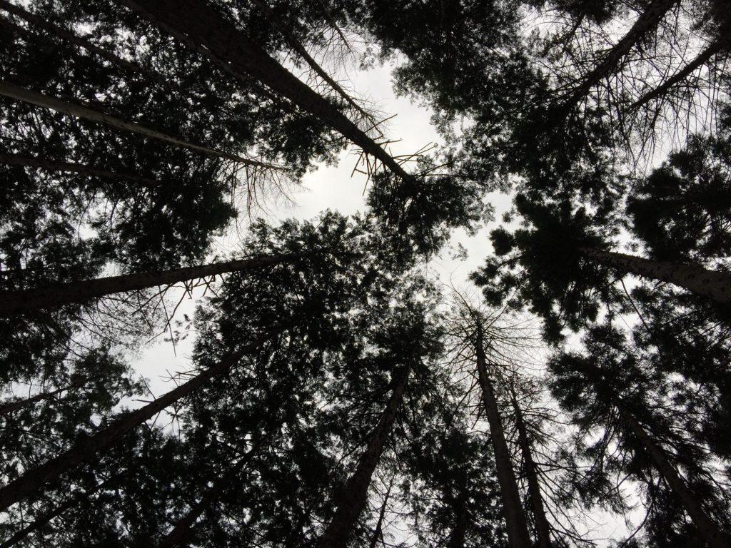 夕方の八王子の森