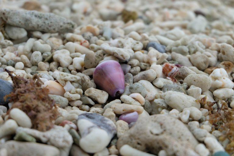 久高島の紫色の貝殻