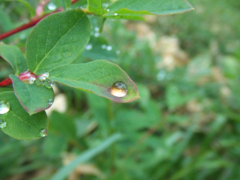 燕岳に生えている草と雨のしずく