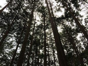 夕方の八王子の森その2