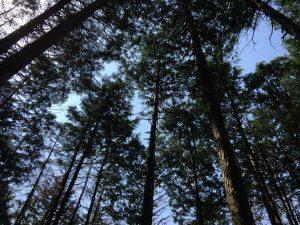 朝の八王子の森