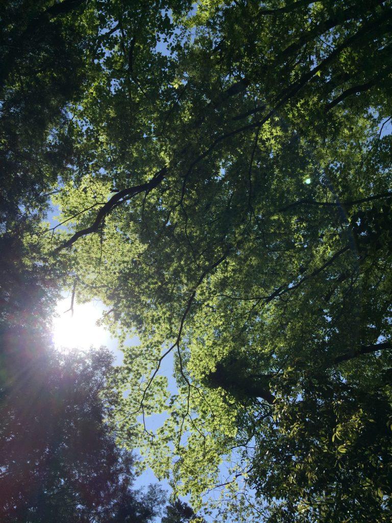 木々の合間から射し込む太陽の光