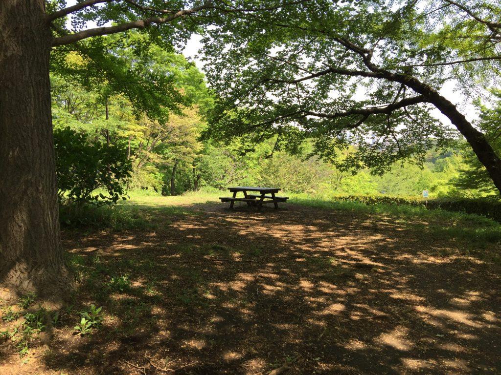 木々とベンチ
