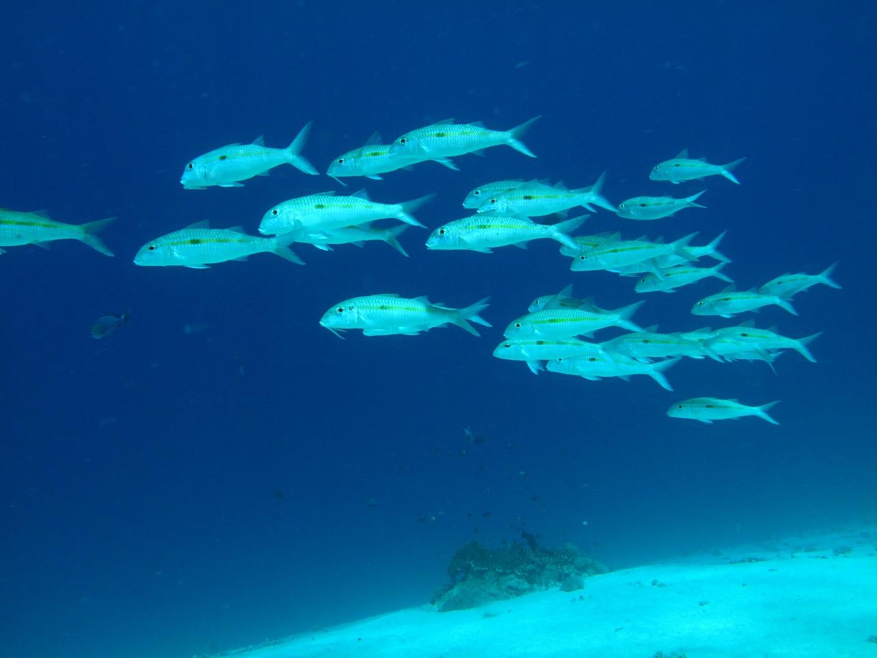 バリ島の海の中で魚が泳いでいる