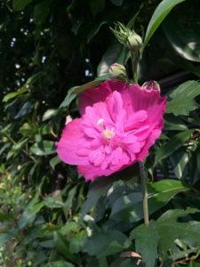 夏の日に咲くきれいな花