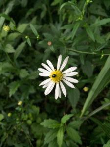 駒ヶ根の野花と虫