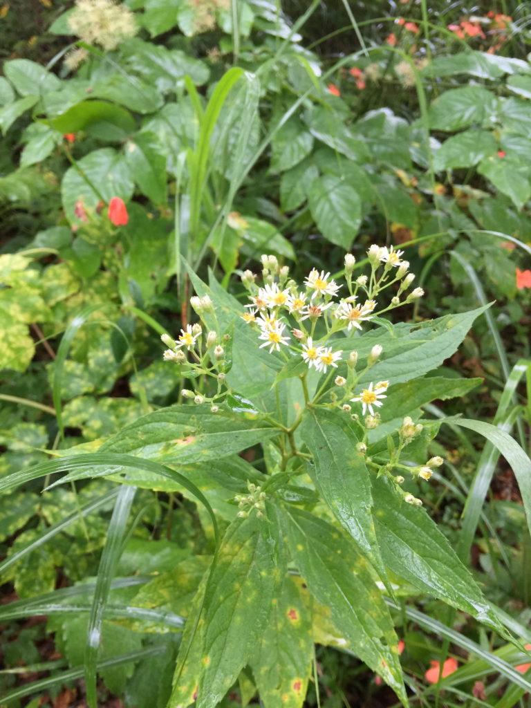 八島湿原の花