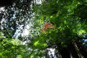 駒ヶ根で始まっている紅葉