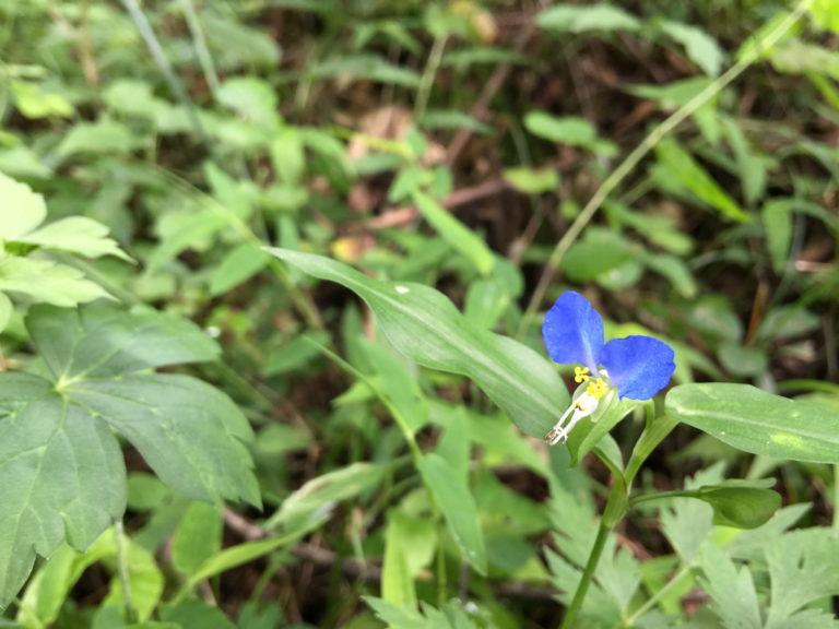 駒ヶ根の野花1