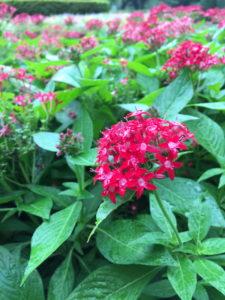 新宿御苑の赤い小さな花