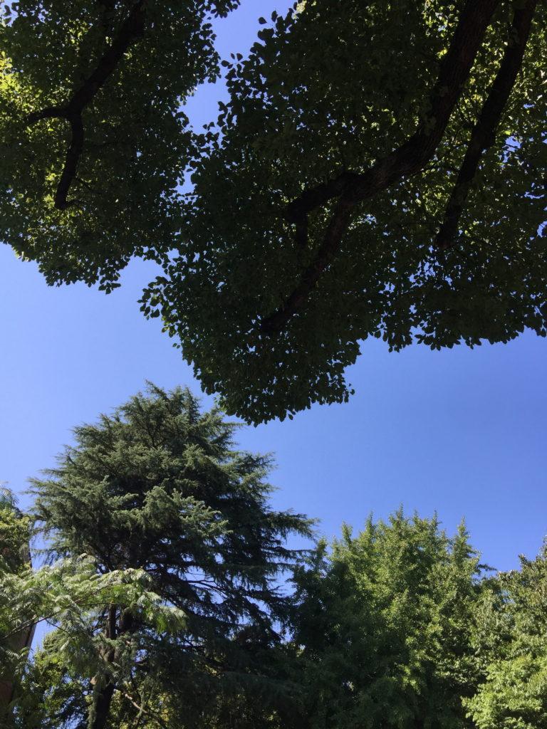 芝公園の緑と青空