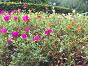 新宿御苑の色とりどりの小さな花