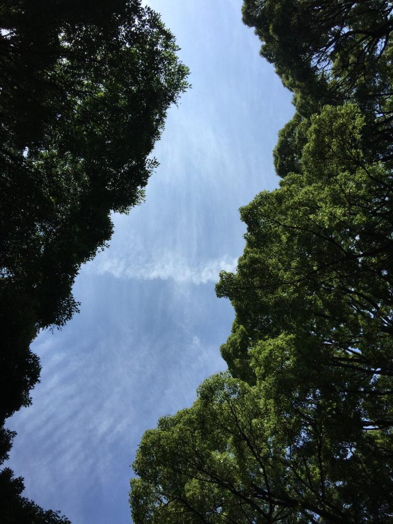 明治神宮の南参道から見上げた空