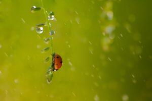 雨とてんとう虫