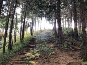 山道の風景