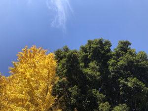 紅葉と青空と緑の木