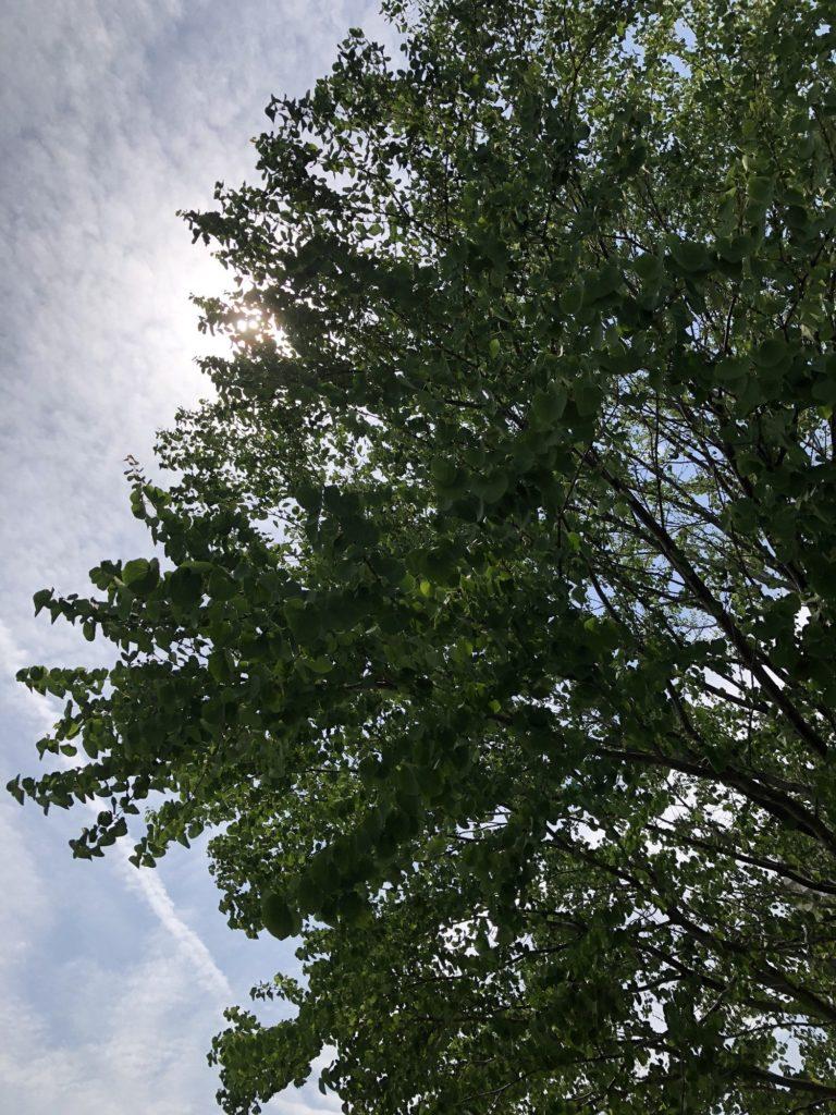 木から差す陽の光