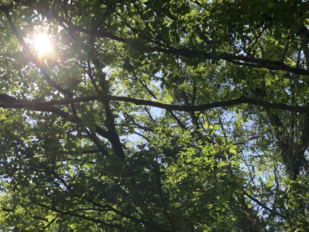 木の合間から射す陽の光