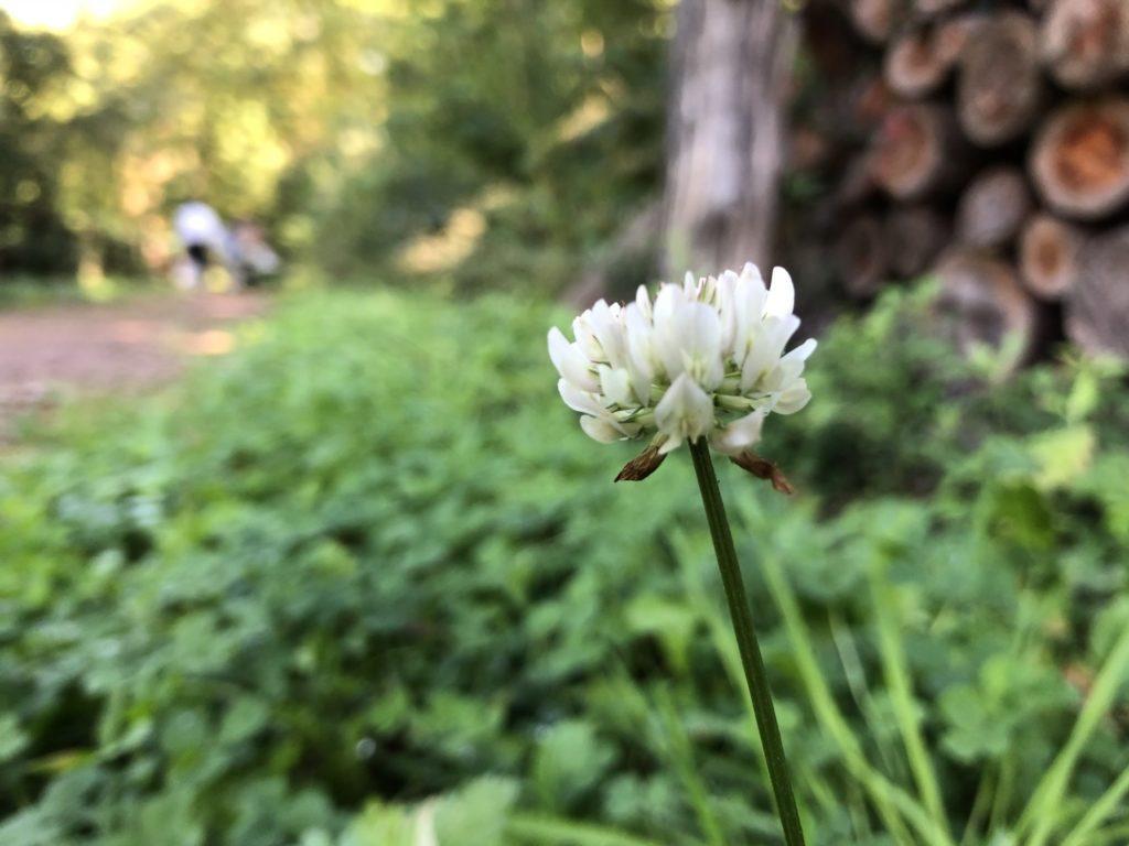 駒ヶ根に咲く花