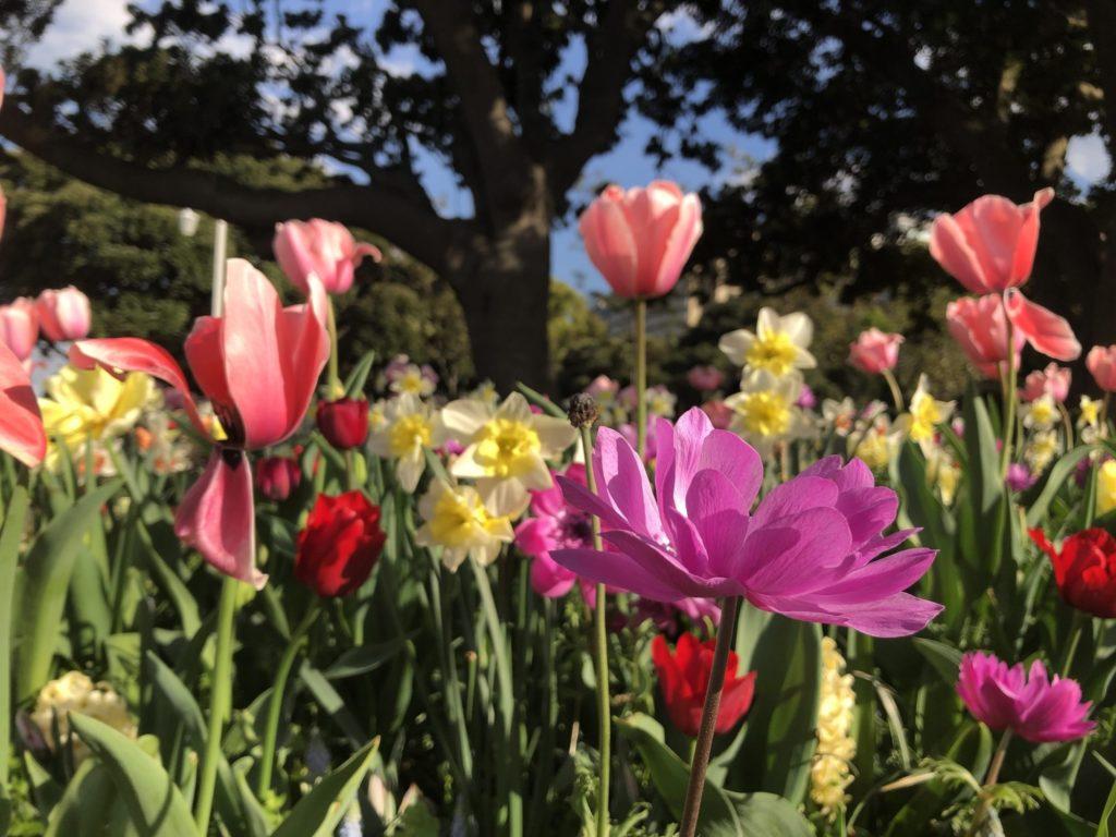 春の色とりどりの花たち