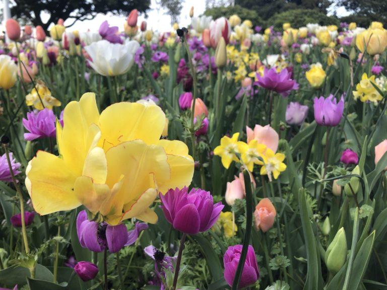 春の色とりどりの花