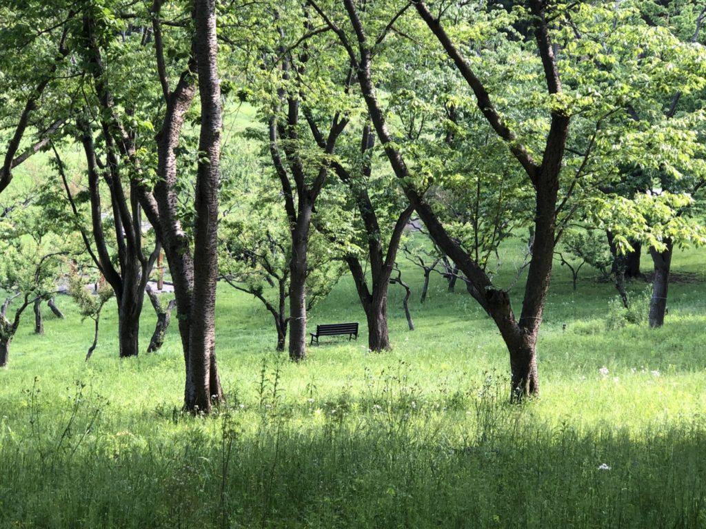 緑とベンチ