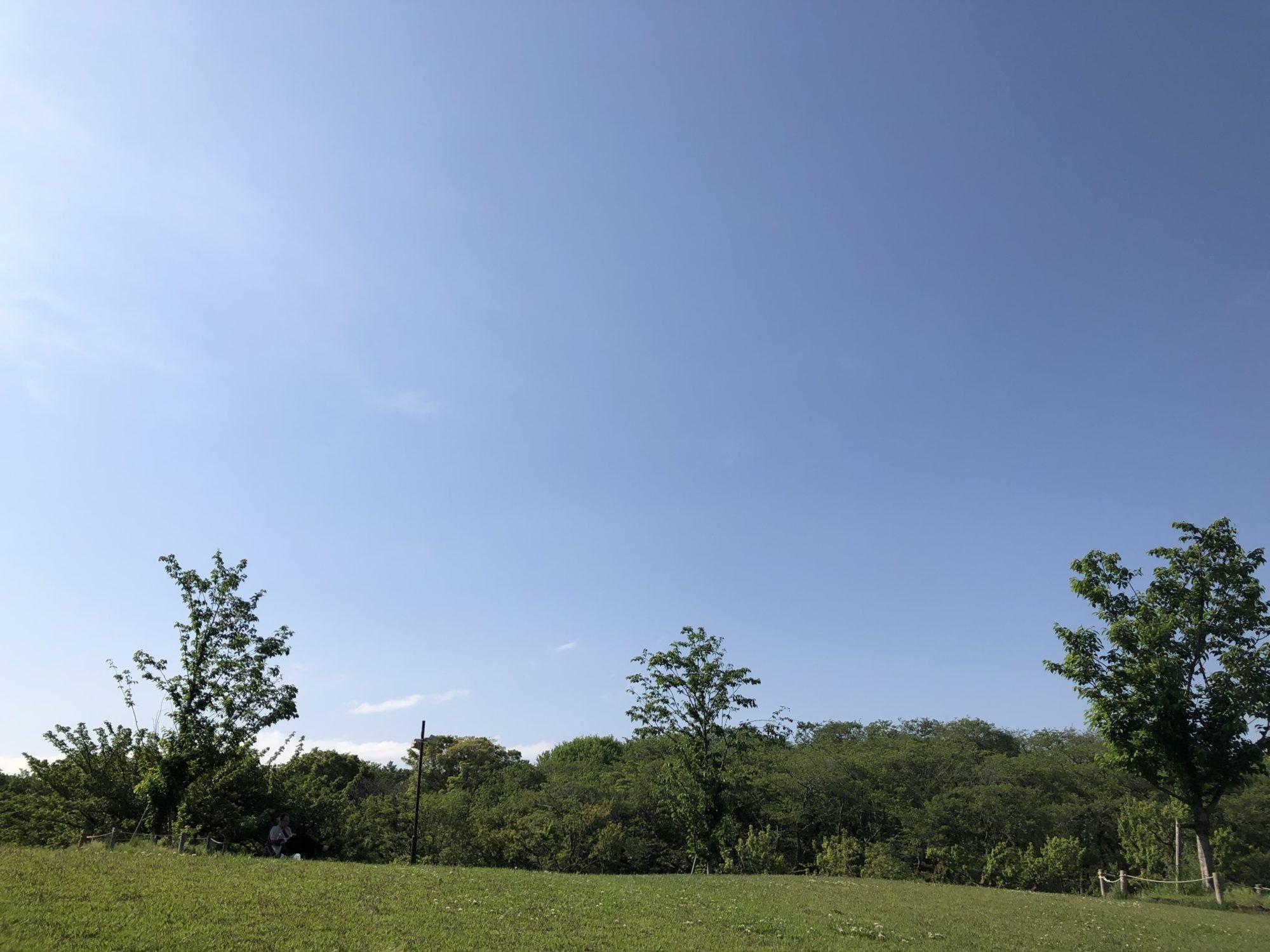 公園の芝生と空