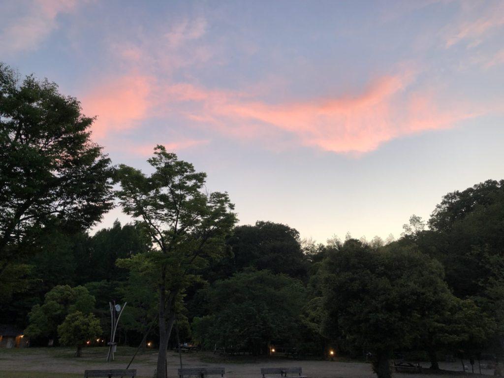 夕陽に染まる雲と木々