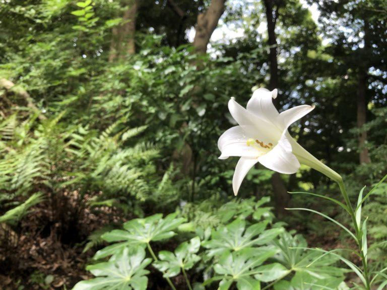 公園に咲く、一輪の白い花