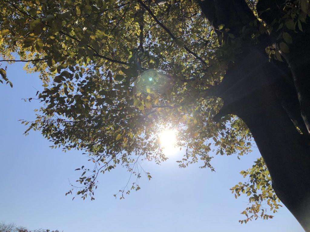 枝の間から射す日差し