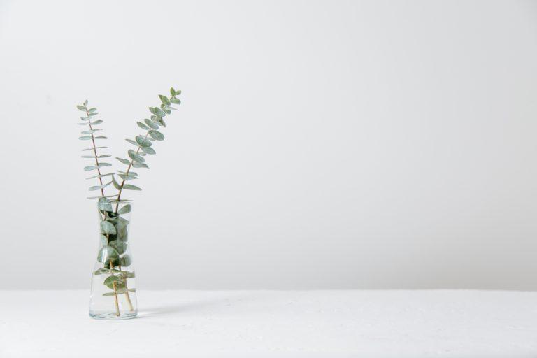 花瓶と植物