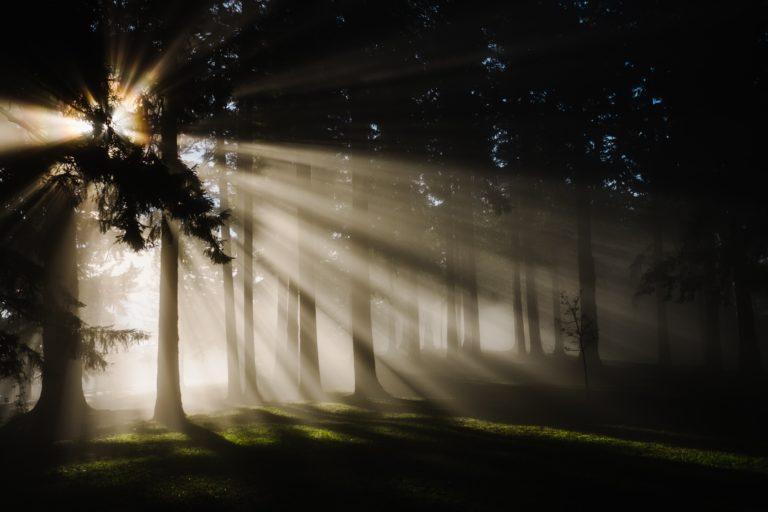 木々の間から射す光