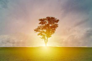 木と夜明け